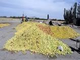 بررسی کاربرد زائدات کشاورزی برنج در حذف کادمیم و نیکل از محلول های آبی