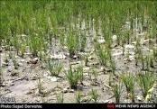 ارزیابی ریسک استفاده از فاضلاب درآبیاری کشاورزی با استفاده از روش AHP