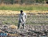 فعّالیتهای کشاورزی و تأ ثیر آنها در آلوده نمودن آبهای سطحی و زیرزمینی