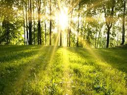 مقاله بررسی تأثیر جنبه های مختلف نور درون پوشش گیاهان
