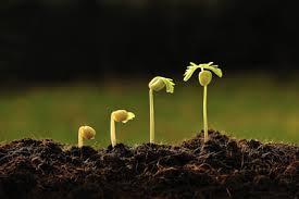پروژه بررسی زیست پذیری و طول عمر دانه ها