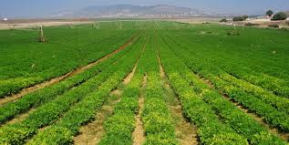 پروژه بررسي خصوصيات اكولوژيكي و زراعي سيستم هاي كشاورزي پايدار