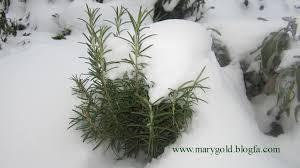 درک مقاومت سرمایی گیاه