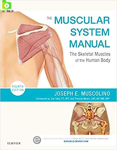 دانلود کتاب راهنمای سیستم عضلانی: عضلات اسکلتی بدن انسان- The Muscular System Manual: The Skeletal Muscles of the Human Body