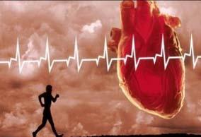 مقاله ی ورزش و قلب و تأثیر آن بر دستگاه گردش خون