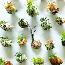 تحقیق درباره فتوتروپیسم ریشه (چگونگی تاثیر نور و جاذبه بر شکل گیاه)