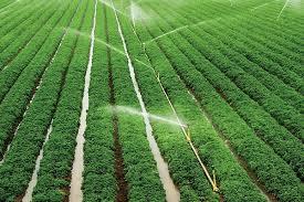 تحقیق درباره فيزيولوژی گياهان زراعی