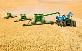 تحقیق درباره کاربرد گیاهان قندی در زراعت