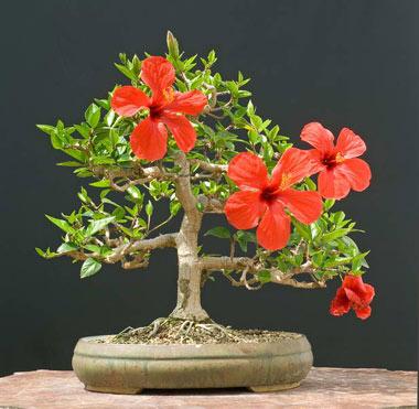 اموزش پرورش و نگهداری گلهای اپارتمانی