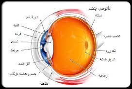 دانلود پاورپوینت ساختمان ساختمان چشم انسان (آناتومي چشم) بيماري هاي چشمي جراحي هاي چشم دانستنيهاي چشم