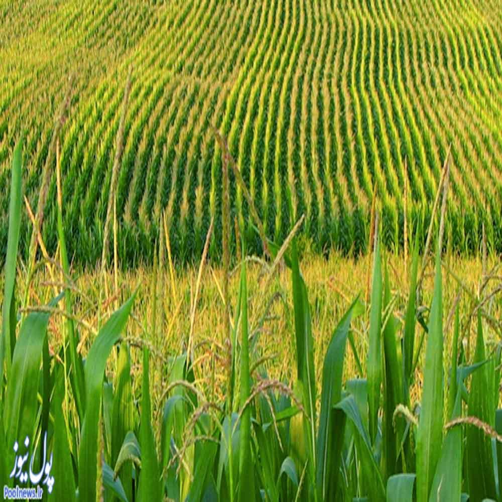 پکیج تحقیق در مورد رشته کشاورزی