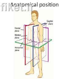 دانلود پاور پوینت اصول کلی آناتومی