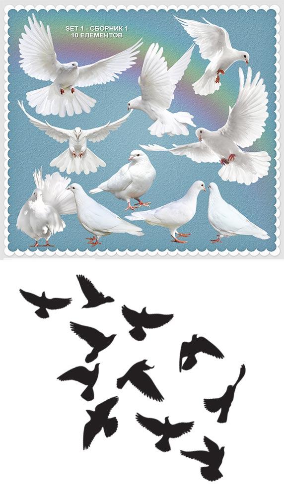 مجموعه کبوتر و پرنده لایه باز