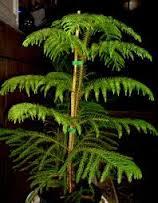 مقاله درس کاشت و تکثیر گیاهان زینتی پودمان پرورش گیاهان زینتی در خانه