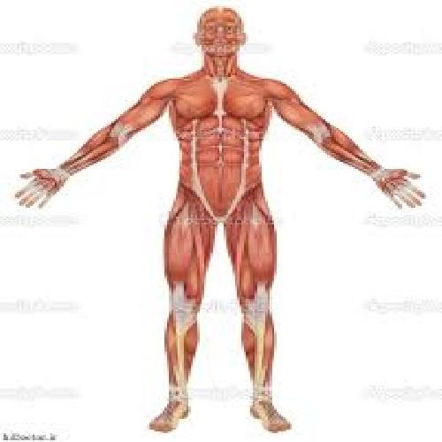 خلاصه درس فيزيولوژی انسانی (رشته تربيت بدنی وعلوم ورزشی)