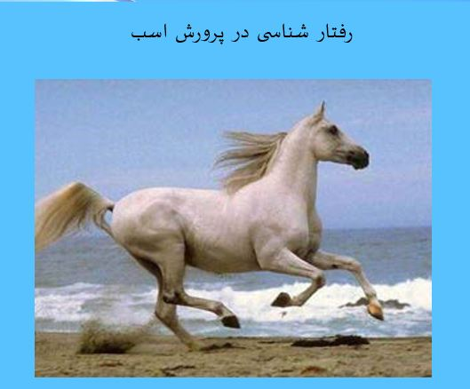 """پاورپوینت درباره """"رفتار شناسی در پرورش اسب"""" در 48 اسلاید"""