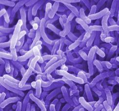 """پاورپوینت """" كنترل بيماري وبا از ديدگاه بهداشت محيط"""" در 34 اسلاید"""