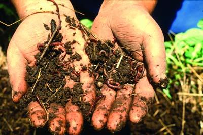 """تحقیق درباره """"فرسایش خاک و دامنه گسترش آن """" در 20 صفحه"""