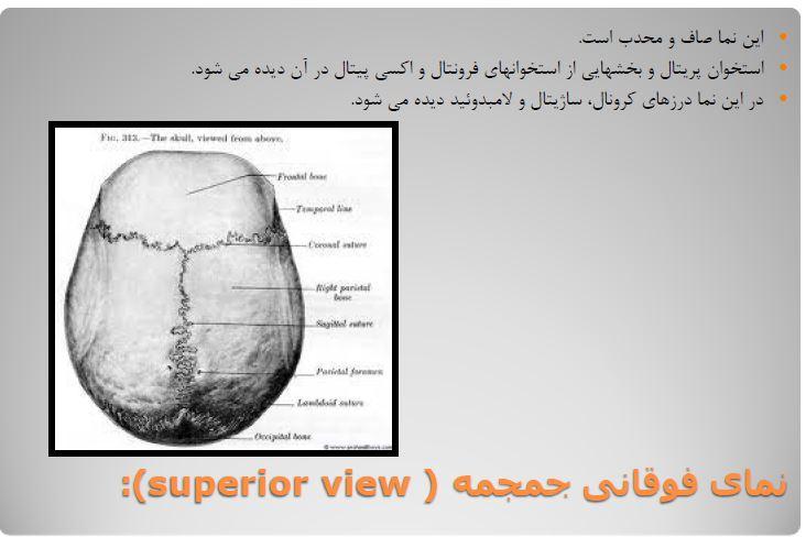 دانلود جزوه آناتومی ناحيه سر و گردن 1 در 38 ص