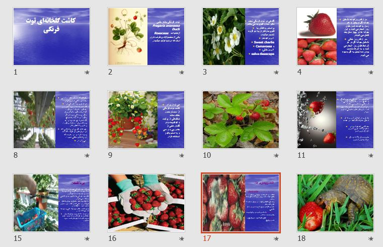 "پاورپوینت ""کاشت گلخانهای توت فرنگی"" 19 اسلاید"