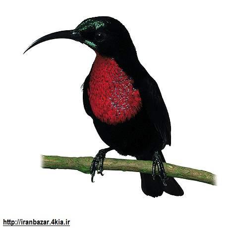 منتاژ عکس پرنده با تصاویر