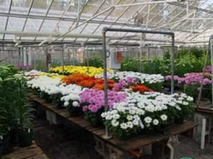 دانلود طرح کارآفرینی احداث گلخانه پرورش گل های زینتی (با قابلیت ویرایش / فایل Word)