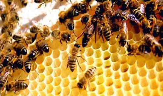دانلود تحقیق و مقاله کامل در مورد الگوریتم کلونی زنبور عسل (فایل Word/با قابلیت ویرایش)تعداد صفحات 11