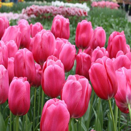 گل ها و گیاهان داروئی