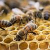 مقاله ارشد الگوریتم کلونی زنبور عسل